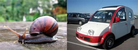 Động vật và xe – Giống đến kinh ngạc